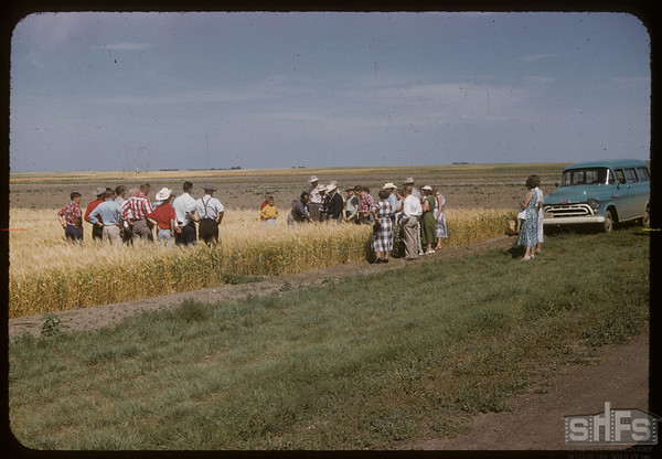 District 3 test plot boys and girls at Experimental Farm.  Swift Current.  08/05/1957