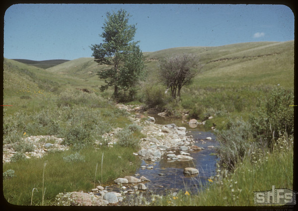 Beginning of the S. Fork of the S. Current.  South Fork.  06/14/1953