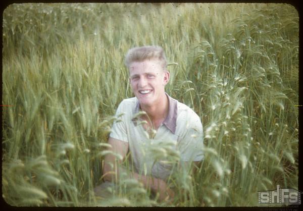 Clif Knutson Barley Variety Test.  Simmie.  08/09/1955
