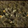 McNabb ranch cacti.  Val Marie.  06/29/1957