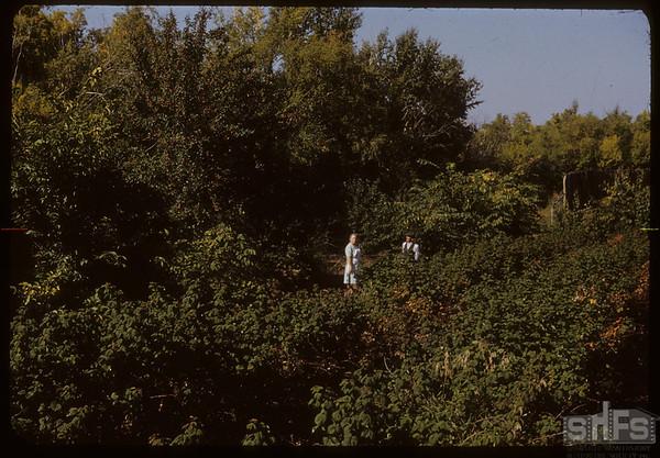Herman Kemper's Orchard Mrs Kemper-Alt. Spencer.  South Fork.  09/20/1950