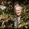 Mrs. William Sharp and plums..  Shaunavon.  08/31/1956