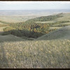 Wooded area S.W. above Shaunavon. Lease in S.F. Valley.  South Fork.  06/27/1954