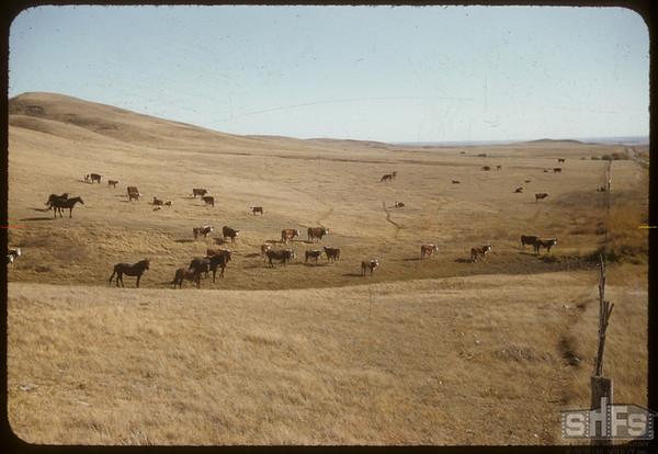 Home on the Range Bill Smith's N of SF.  South Fork.  09/25/1956