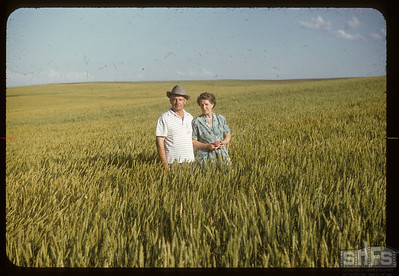 Mr & Mrs Arvid Wickstrom  - in the wheat, Admiral, 08/05/1955