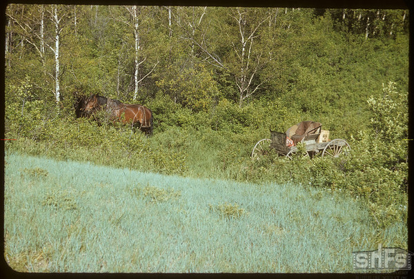 Like the Old Time Picnics. LeMothe's Horses.  South Fork.  06/08/1952