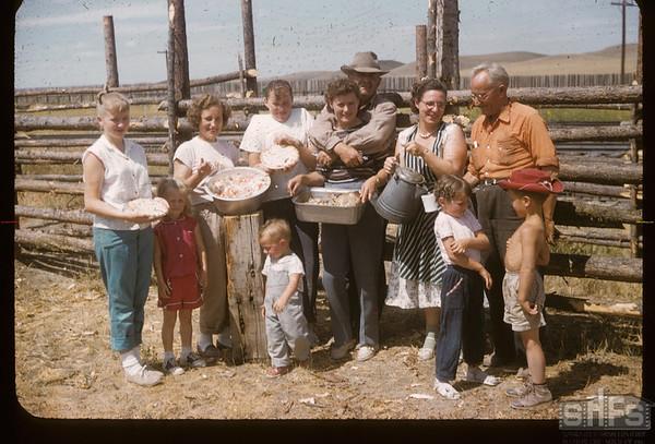 Building stockyards - Jack Dunn - Nora Gillespie & Dixon's. Mankota. 07/30/1957