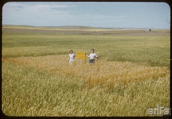 Fred Sutter's variety test plot.  Shaunavon.  08/18/1952