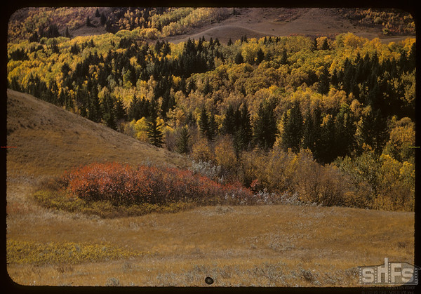 Over Corttral Ravine - looking SW.  South Fork.  09/30/1956