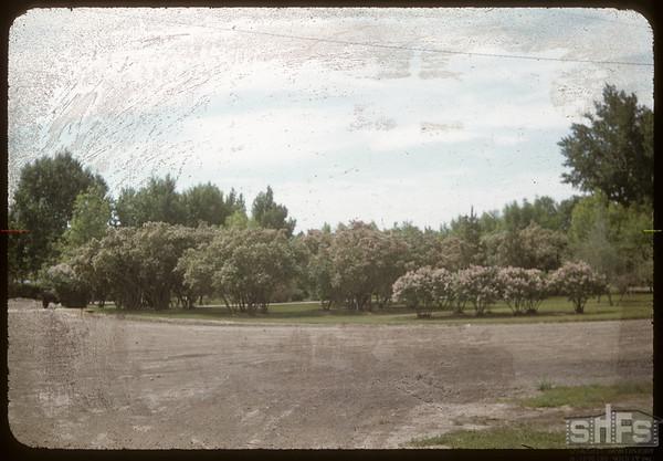 Hospital grounds.  Shaunavon.  06/10/1956