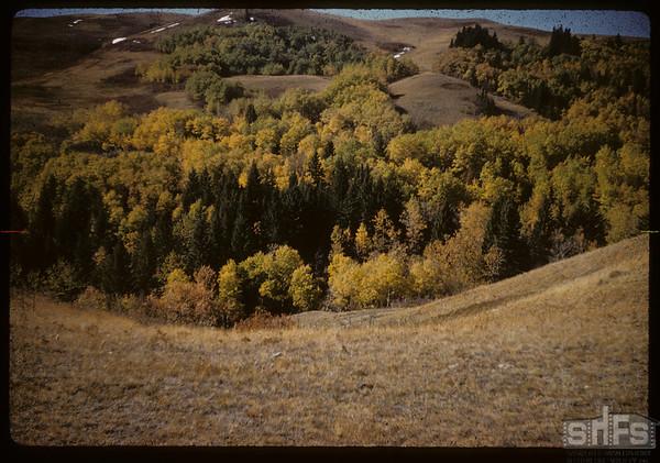 Pine Cree Park.  South Fork.  09/25/1959