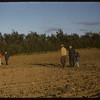 R. P. Robbins field shelter..  Shaunavon.  07/27/1956