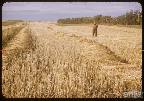 "R. P. Robbins ""1950 World Wheat King"".  Shaunavon.  06/30/1952"