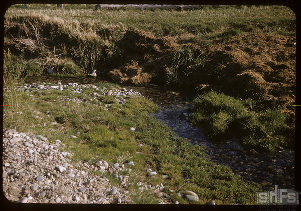 Bill Smith ranch.  South Fork.  05/18/1957