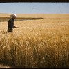 Carl Jacobson standing in barley field.  Chambury.  08/19/1956