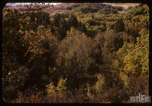 Pine Cree Park from Hill Road looking NW.  South Fork.  10/02/1955