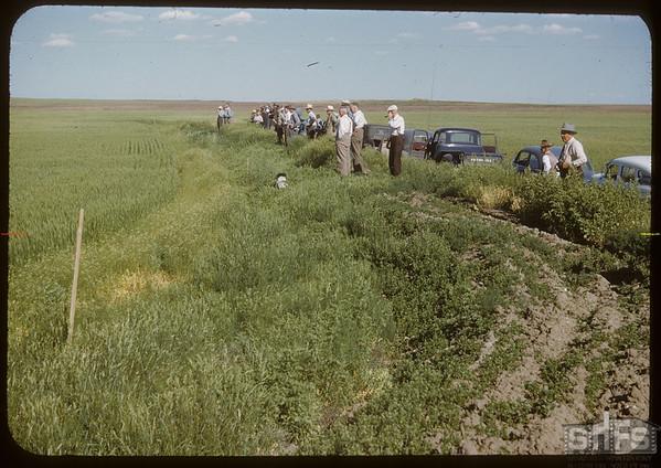 Field Day at Anton Dynneson's Dyke.  Shaunavon.  08/02/1950