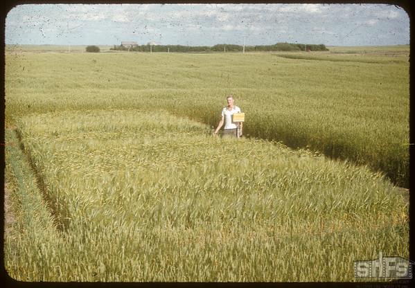 Variety Test Piet N.W.F.P..  Simmie.  08/09/1955