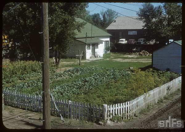 Jacob Golem's garden.  Shaunavon.  08/24/1954