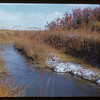 Frenchman River (White Mud River) and buffalo berries near 70 Mile Butte.  Val Marie.  10/31/1951