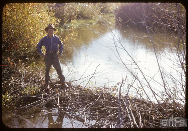 Frank Dordeau at Beaver Dam.  South Fork.  09/28/1952