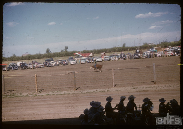 Shaunavon rodeo - steer riding.  Shaunavon.  07/23/1957