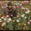 Otto Yunck in his flower garden.	 Shaunavon.	 08/10/1952