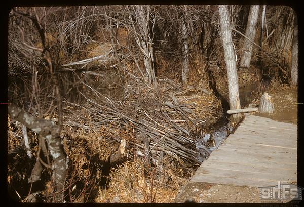 Beaver Dam - Pine Cree Park.  South Fork.  11/08/1958