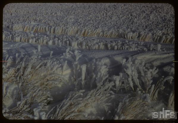 Winter stubble near Art Morrow's.  Simmie.  01/04/1957