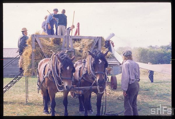 Yorkton Thresherman's Festival - horse drawn hay rack.  Yorkton.  08/01/1999