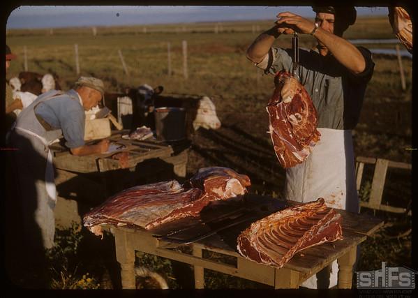 Pioneer beef ring. Steve Grubbe - booking; Harold Grubbe - weighing.  Shaunavon 08/26/1950