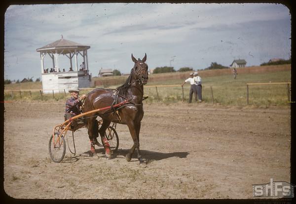 Shaunavon Fair - Archie McCallum in the Harness Race.  Shaunavon.  07/27/1955