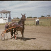Shaunavon Fair - Archie McCallum in the Harness Race.  Shaunavon.  07/27/1955