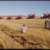 Five Massey-Harris combines at work on Roy Force's farm. [Super 27's] Shaunavon	 09/22/1952