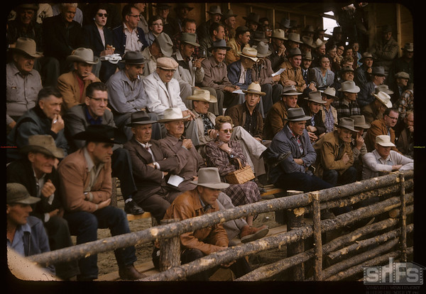 1st commercial livestock sale - 530 head sold - livestock sale where buyers and sellers meet. Mankota.  08/28/1957