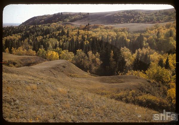 Pine Cree Park - Hillcrest Drive.  South Fork.  09/26/1956