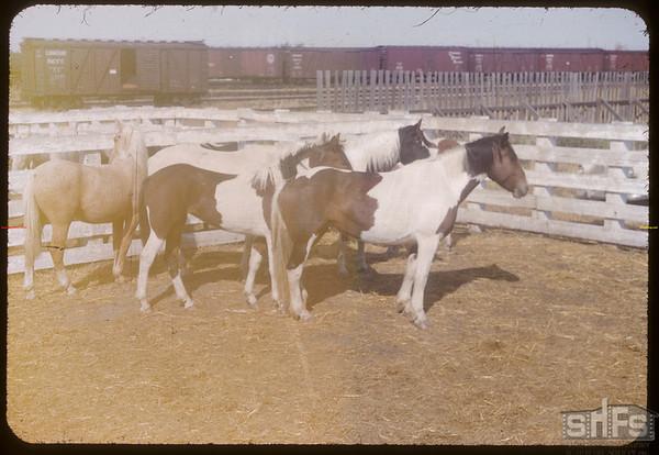 Angus Willet horse sale.  Shaunavon.  09/25/1953