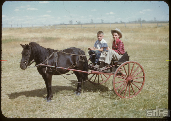 Jack Lorge with pony and cart.  Shaunavon.  07/25/1950