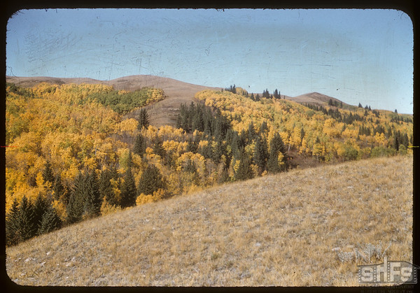 NW section of Pine Cree Park.  South Fork.  09/30/1956