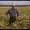Alex Malone standing in barley field.  Shaunavon.  08/12/1957