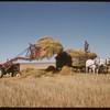 Loading horse drawn hay racks.  Shaunavon.  09/21/1957