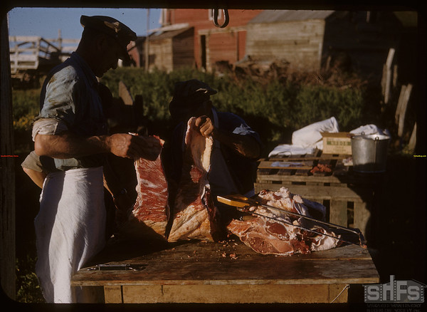 Pioneer beef ring - cutting out the tenderloin.  Shaunavon.  08/26/1950