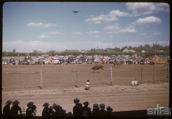 Shaunavon rodeo - steer riding with plane flying overhead.  Shaunavon.  07/23/1957