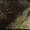 Beaver dam - north end of Shaunavon lease.  South Fork.  10/09/1954