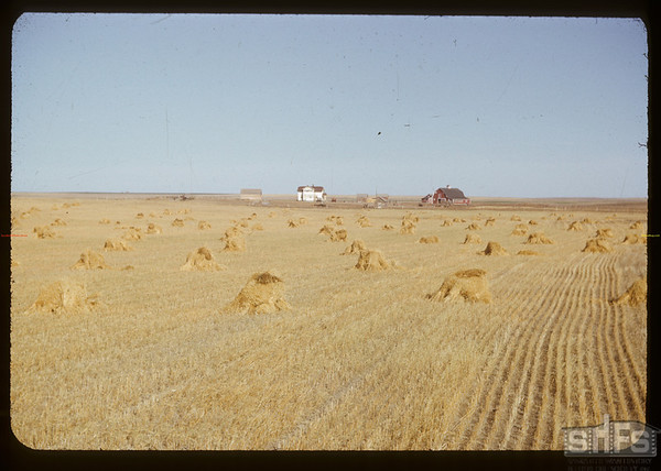Ovid Nadu home with stooks in the foreground.  Val Marie  10/13/1950
