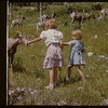 Lynn & Irene Graham feed mountain sheep..  Banff.  07/29/1951