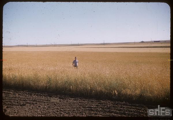 Garth Simpson standing in field.  Shaunavon.  08/18/1956