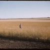 Garth Simpson standing in field.  Shaunavon.  08/18/1956