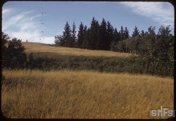 West side.  South Fork.  08/25/1952