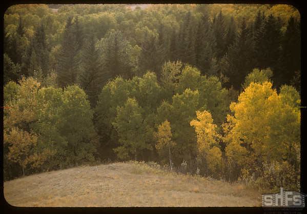 Pine Cree park.  South Fork.  09/23/1956